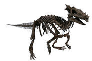 The Childrens Museum of Indianapolis - Dracorex skeletal reconstruction