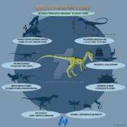 Compsognathus lite infographic by mcmikius-d9g80p5
