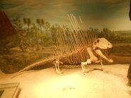Drumheller dimetrodon (3)
