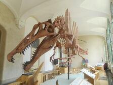 Scheletro di spinosauro a Milano