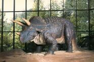 Pink-Palace-Triceratops-700x466