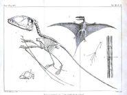 Pterodactyl skeleton