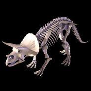 Triceratops Skeleton 1