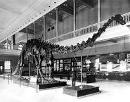 Carnegiediplodocus