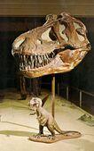 Tyrannosaurus-skull-and-Jonas-model-626x1000