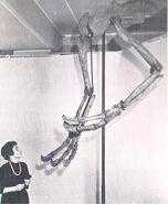 Deinocheirus claws web