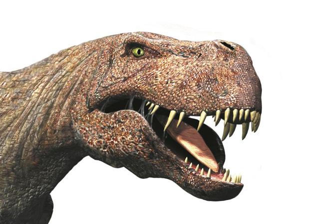 File:T-rex-picture.jpg