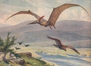 Pteranodon dwdu1912cropped