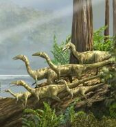 Coelophysis Group