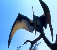 Pteranodon about to take off