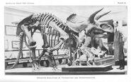 Sharp smithsonian1920 triceratops