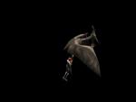 Regina defeated by Pteranodon