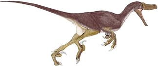 Velociraptor01