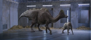 Hypacrosaurus 4