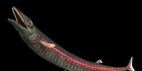 Leptecodon
