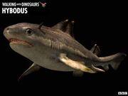 Hybodus