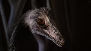 Archaeopteryx head