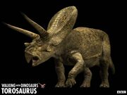 Torosaurus z1