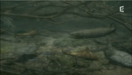 Devonian freshwater fish