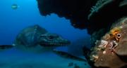 Eromangasaurus 1