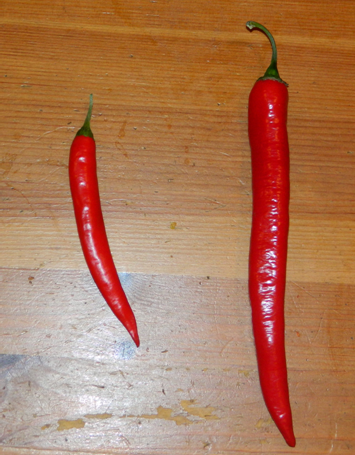 File:Large Cayenne Pepper.png