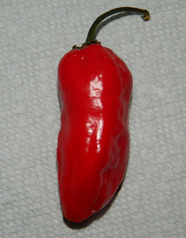 File:Suspected Bhut.png