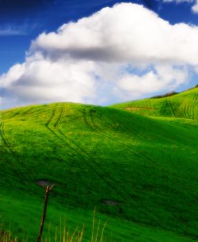 File:Grasslands background 1.png