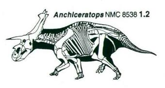 File:Anchiceratops skeleton.jpg