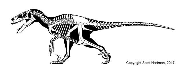 File:Utahraptor skeleton.JPG