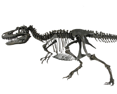 File:Gorgosaurus skeleton.jpg
