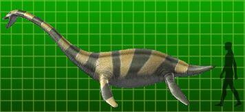Muraenosaurus