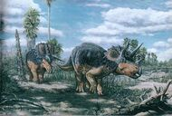 Pic triceratops