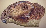 Tatankacephalus