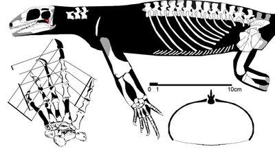 Acerosodontosaurus588