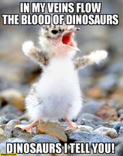 In-my-veins-flow-the-blood-of-dinosaurs-i-tell-you-cute-tiny-bird