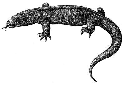 Palaeosaniwa canadensis by biarmosuchus-d5x8beb