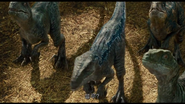RaptorSquadInEclosure