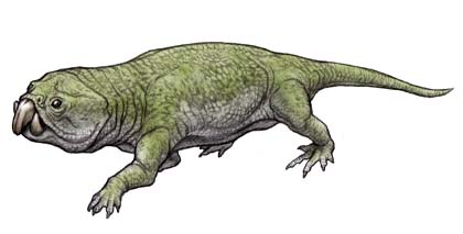 File:Rhynchosaurus.jpg