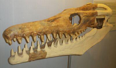 Goronyosaurus nigeriensis 1