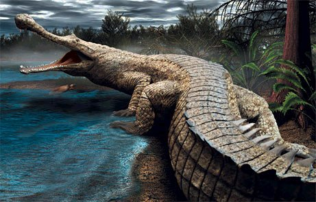 a comparison of the alligators and crocodiles reptile species What is the difference between crocodiles, alligators and crocodilians all species of crocodiles, alligators (reptiles) is divided into.