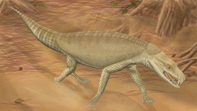 File:Armadillosuchus123.jpg
