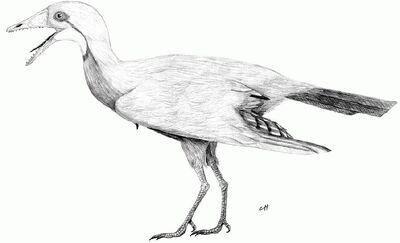 Eocathayornis yandica by PaleoAeolos