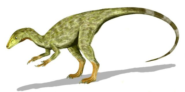 File:Compsognathus BW3.jpg