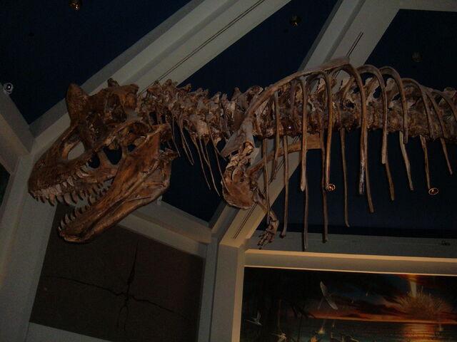 File:Replica Carnotaurus skeleton, DINOSAUR 1.jpg