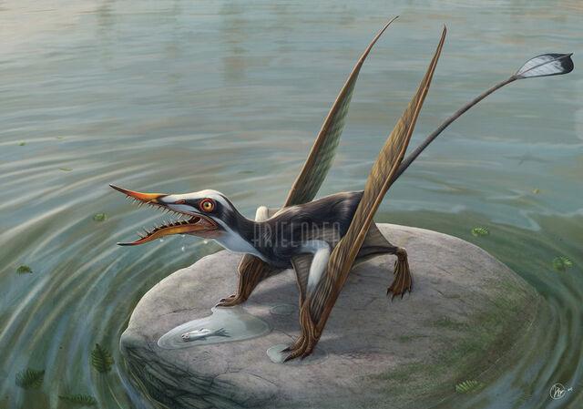 File:Rhamphorhynchus by ariel orea-d54w27n.jpg