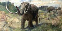 American Mastodon/Gallery