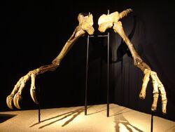 Deinocheirusbcn.jpg