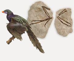 Koreanarchaeopteryx
