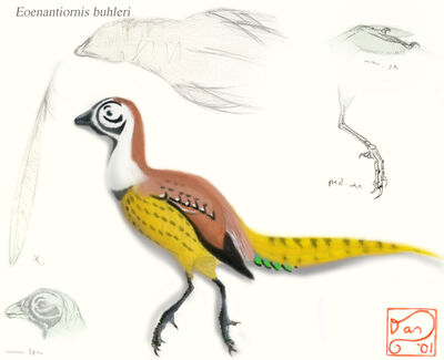 Eoenantiornis buhleri by bensen daniel