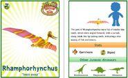 Rhamphorhynchus (2)